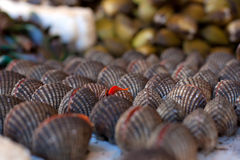 Fresh seafood in asian market. Mussels Royalty Free Stock Photos