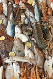 Fresh seafood background. Lot of species Stock Images