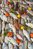 Fresh seafood background. Lot of species Stock Image