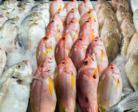Fresh seafood background Stock Photos