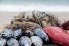 Fresh seafood on the beach Stock Photo