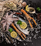 Fresh seafood on black stone. Royalty Free Stock Photography