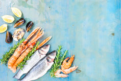 Fresh seafood on blue background Royalty Free Stock Image