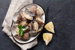 Fresh seafood bowl on stone table. Scallops Stock Image