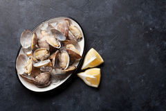 Fresh seafood bowl on stone table. Scallops Stock Photo