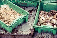 Fresh seafood in boxes at the fish market Stock Photo
