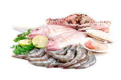 Fresh seafood. Fresh catch of fish and other seafood Stock Photography