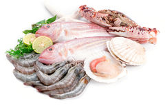 Fresh seafood. Fresh catch of fish and other seafood Stock Image
