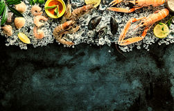 Fresh Seafood Chilling on Ice on Dark Background Royalty Free Stock Photos