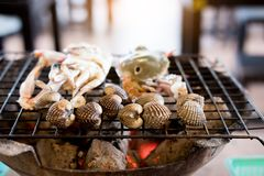 Fresh seafood clam cooking  Cockles, hard shell clams. Fresh seafood clam cooking. Cockles, hard shell clams Stock Images