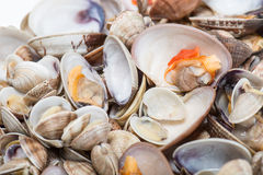 Fresh seafood, clams and cockles prepared Stock Images