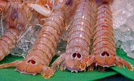 Fresh seafood - close view of mantis shrimp tails Royalty Free Stock Image