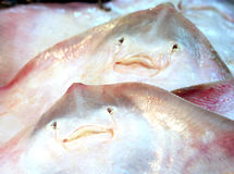Fresh seafood - close view of small stingrays at seafood market. Spain Stock Images