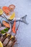 Fresh seafood on crashed ice Stock Images