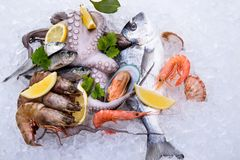 Fresh seafood on crashed ice Stock Image