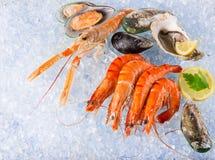 Fresh seafood on crushed ice. Royalty Free Stock Image