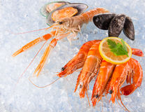Fresh seafood on crushed ice. Stock Photo