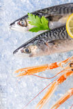 Fresh seafood on crushed ice. Stock Images