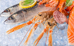 Fresh seafood on crushed ice. Stock Photography