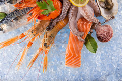 Fresh seafood on crushed ice. Royalty Free Stock Image