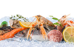 Fresh seafood on crushed ice. Stock Image