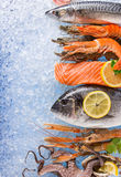 Fresh seafood on crushed ice. Fresh seafood on crushed ice, close-up Royalty Free Stock Image