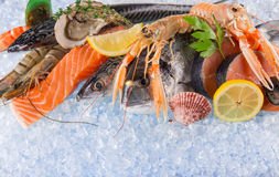 Fresh seafood on crushed ice. Royalty Free Stock Photography