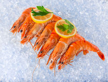 Fresh seafood on crushed ice. Royalty Free Stock Images