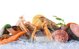 Fresh seafood on crushed ice. Stock Photos