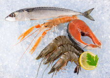 Fresh seafood on crushed ice. Fresh seafood on crushed ice, close-up Stock Photo