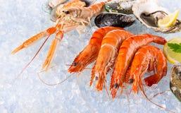 Fresh seafood on crushed ice. Fresh seafood on crushed ice, close-up Stock Image
