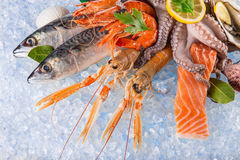 Fresh seafood on crushed ice. Fresh seafood on crushed ice, close-up Stock Photography