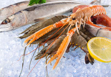 Fresh seafood on crushed ice. Fresh seafood on crushed ice, close-up Stock Photos