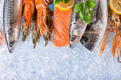 Fresh seafood on crushed ice. Fresh seafood on crushed ice, close-up Royalty Free Stock Photos
