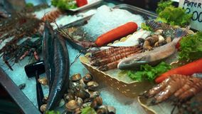 Fresh seafood on crushed ice stock footage