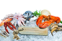 Fresh seafood on crushed ice. Fresh fish and seafood arrangement on crushed ice royalty free stock image
