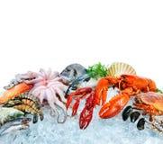 Fresh seafood on crushed ice Stock Image