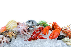 Fresh seafood on crushed ice royalty free stock image