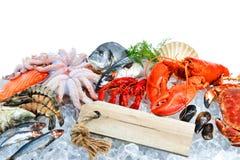 Fresh seafood on crushed ice Stock Photo