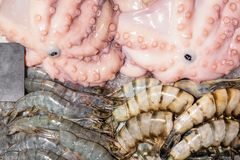 Fresh seafood on crushed ice at fish market. Octopus and big royal tiger shrimos on display counter at store.  royalty free stock photography