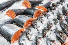 Fresh seafood on crushed ice at fish market. Raw dorado, seabass and salmon fillet on display counter at store. Fish filleting.  royalty free stock photos