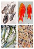 Collage of Fresh Seafood on Display for Sale Royalty Free Stock Photos