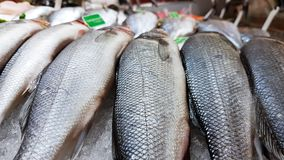 Fresh seafood fish on ice selling in super market royalty free stock photo