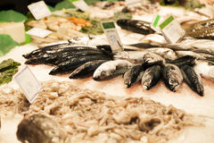 Fresh seafood in the fish market Stock Photos