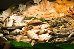 Fresh seafood in the fish market Royalty Free Stock Images