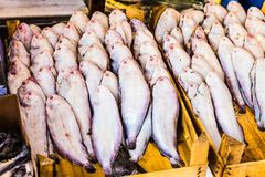Fresh seafood  in fish market Stock Photography