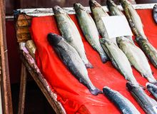 Fresh seafood  in fish market Stock Photos