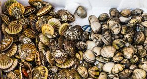 Fresh seafood  in fish market Royalty Free Stock Images
