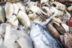 Fresh seafood at the fish market. Fresh seafood at the fish market, shallow depth of field Royalty Free Stock Images