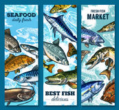 Fresh seafood and fish market sketch banner set. Fresh seafood and fish market banner set. Salmon, tuna, blue marlin, trout, pike, mackerel, flounder, catfish Stock Image